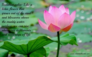 Pink-Lotus-and-Green-Leaves-Top-HD-Wallpaper